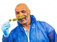 Mike Tyson cria resort na Califórnia dedicado à maconha