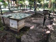 Você conhece o mel das abelhas sem ferrão?