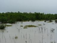Projeto atua na recuperação e conservação de manguezais