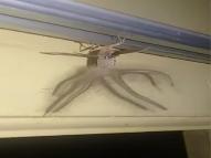 Criatura estranha aparece em Bali e é confundida com ET