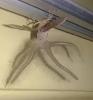 Não era um ET: criatura estranha de Bali é catalogada