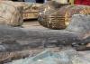 Vídeo: com 2.500 anos, sarcófagos são expostos no Egito
